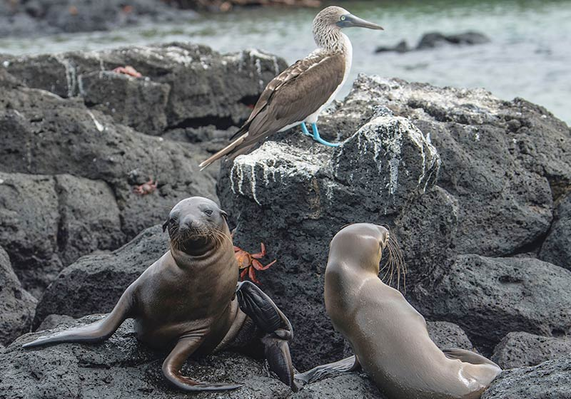 Allexpeditions Discover Ecuador Iconic Travel Tours | Discover Iconic Ecuador | Ecuador Galapagos Trips Travel Package Tour