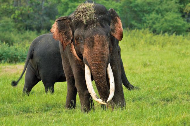 AllExpeditions Travel Sri Lanka